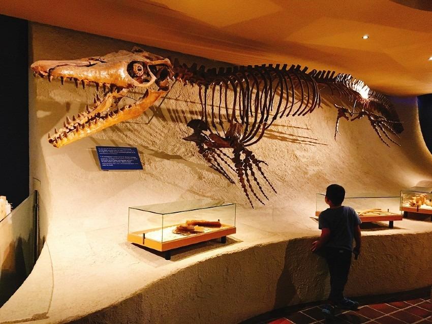 マーストリヒト自然史博物館